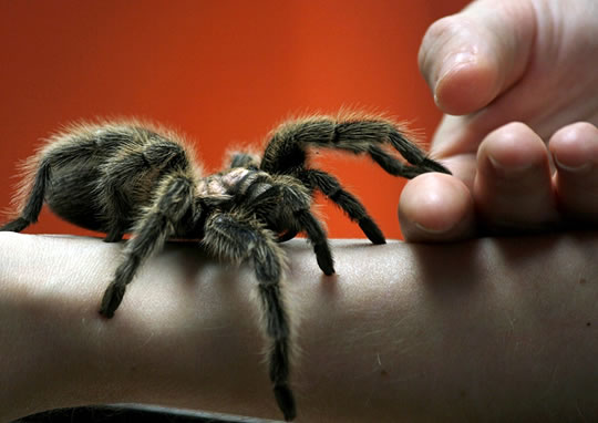 Post image for Arachnophobia: Why People Are Scared of Spiders