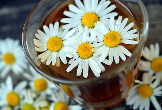 Study: 4 Herbs That Influence Both Mood And Memory post image