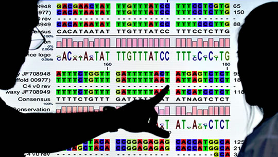 Genetic Trigger Discovered For Most Common Form of Mental Disability and Autism post image