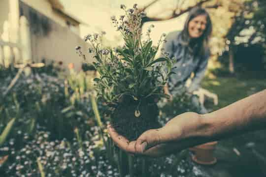 This Type Of Gardening Makes People Happiest post image