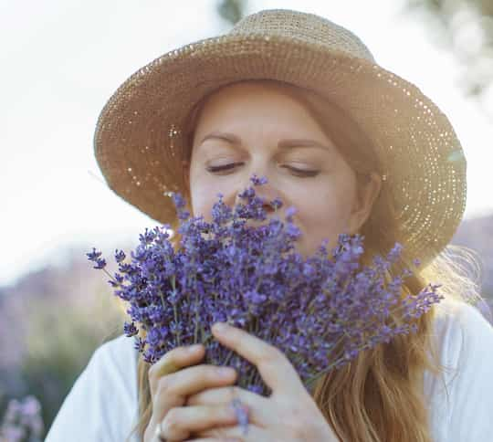 The Smell Of Lavender Reduces Anxiety post image
