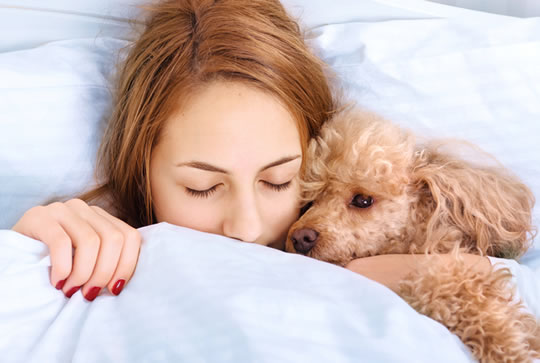 Pets In Bed: Study Reveals If It Helps or Hurts Sleep post image
