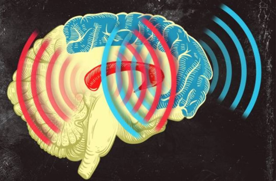 Post image for Humming in Sync: How Our Brains Can Learn So Quickly