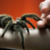 Thumbnail image for Arachnophobia: Why People Are Scared of Spiders