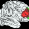 Thumbnail image for Unique Human Brain Area Identified that Separates Us From Monkeys