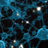 Thumbnail image for Drug Reverses Schizophrenia in Mice by Curbing Synaptic Pruning